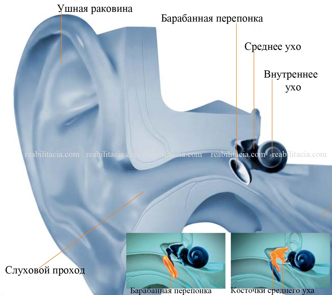 Audiology_Guide_DD.indd